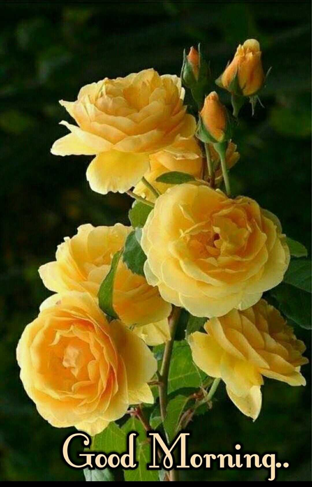 Good Morning Wishes With Yellow Hd Roses Pictures Photosbin